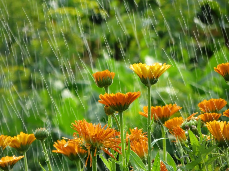 Flowers in rain shutterstock_358580264