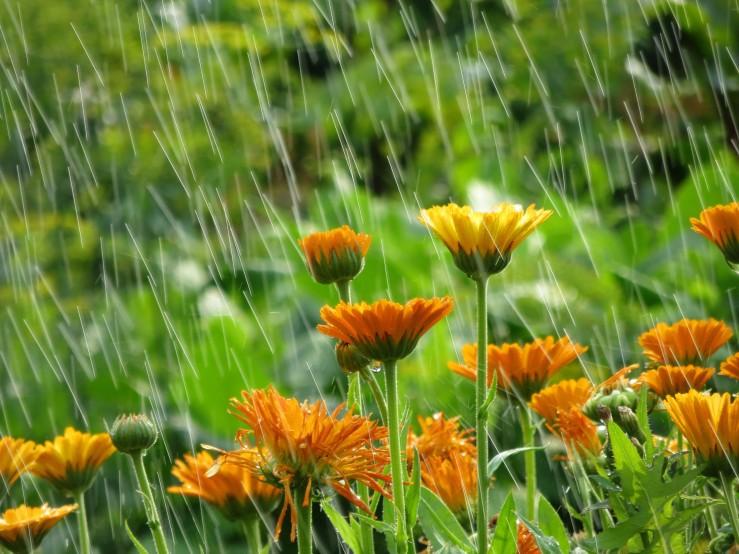 Flowers in rain shutterstock_358580264